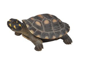 TURTLE-LARGE SPOTTED TURTLE